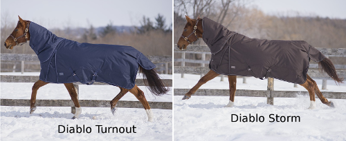 Canadian Horsewear Collection Diablo
