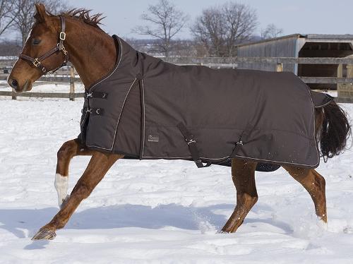 Canadian Horsewear Titanium II