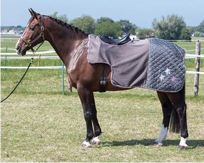 Harry's Horse Exercise Sheet quarter sheet