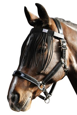 Fly Browband harrys horse
