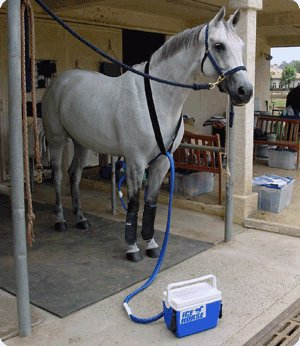 ice horse 2 leg therapy system
