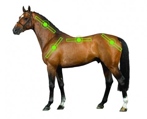 horseware Sportz Vibe