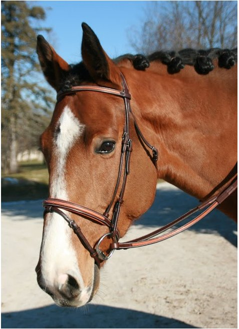 Tuscany 2 Tone Bridle with Removable Flash